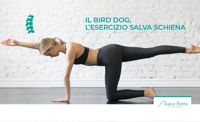 luca-serra-bird-dog-esercizi-per-mal-di-schiena